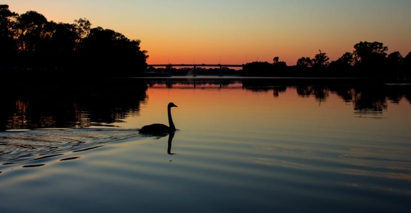 10-Swanning on the Murray - 90n