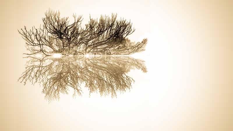 Portsea Tea Tree by Sharon Crabb